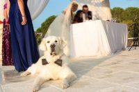 bodas finca la alcudia